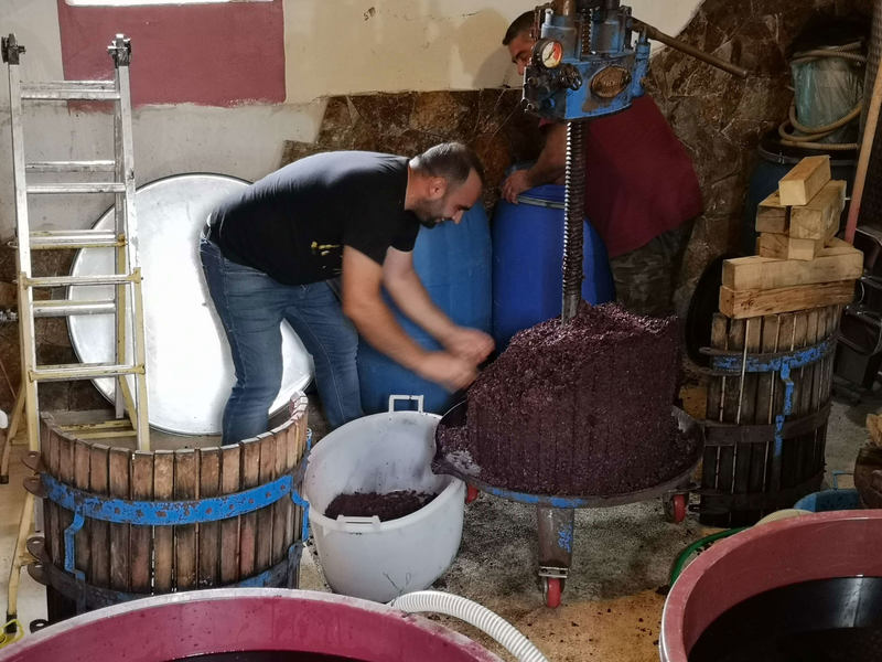 Robimy wino